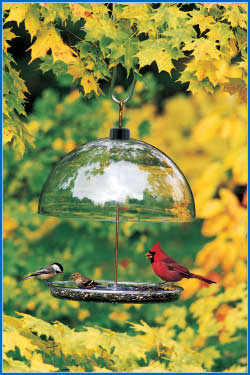 Droll YankeeD Dorothy's Cardinal Bird Feeder - American Made