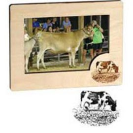 4X6 Picture Frame - Cow