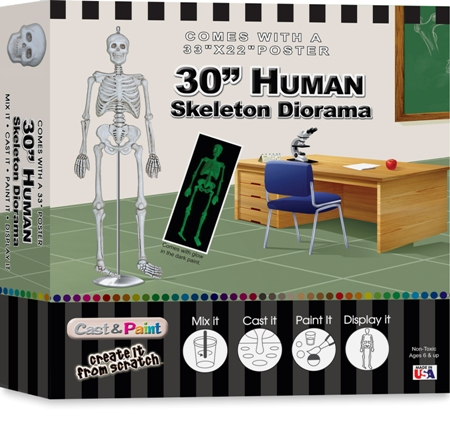 Cast & Paint Model Kit:30 Inch Human Skeleton Diorama