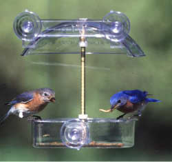 Droll Yankees Winner Window Feeder - American Made