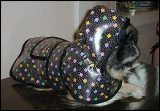 Confetti Dog Rain Coat American Made