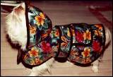 Tropical Dog Raincoat - American Made