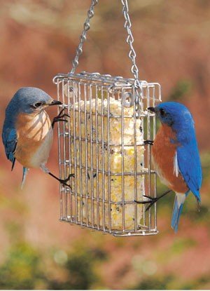 Premium Suet Feeder Single - American Made