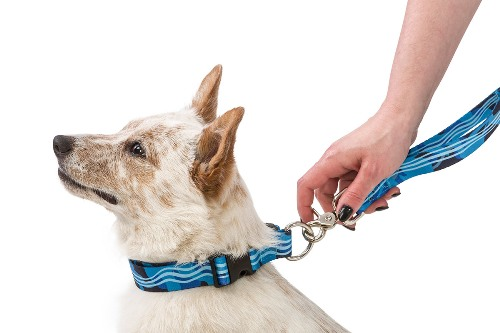 Outings Leash Made in USA