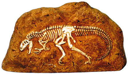 Allosaurus In Rock American Made