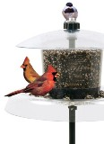 Jagunda Squirrel-Proof Bird Feeder Made in USA with Auger