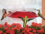 Window Mounted Hummingbird Feeder  - Made in USA