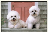 BICHON FRISES Indoor/Outdoor Doormat American Made