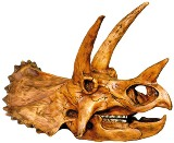Triceratops Skull Made in USA